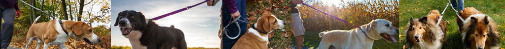 A Better Leash and a More Enjoyable Walk for You and Your Pup....Guaranteed