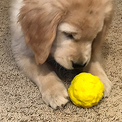 The Best Fetch Toy for Puppies and Dogs is the WUNDERBALL - Bounces, floats, and is virtually indescructible