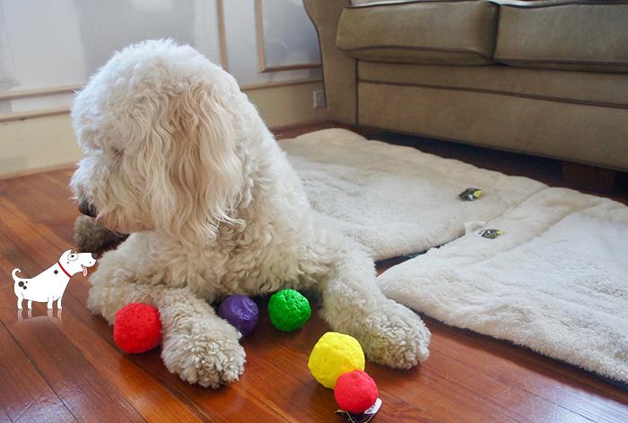Avis client WUNDERBALL - En savoir plus sur cette balle de chien pratiquement indestructible